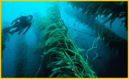 KelpForestDive