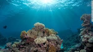 CoralSun