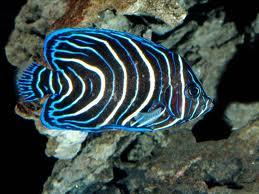 FishBlueWhite